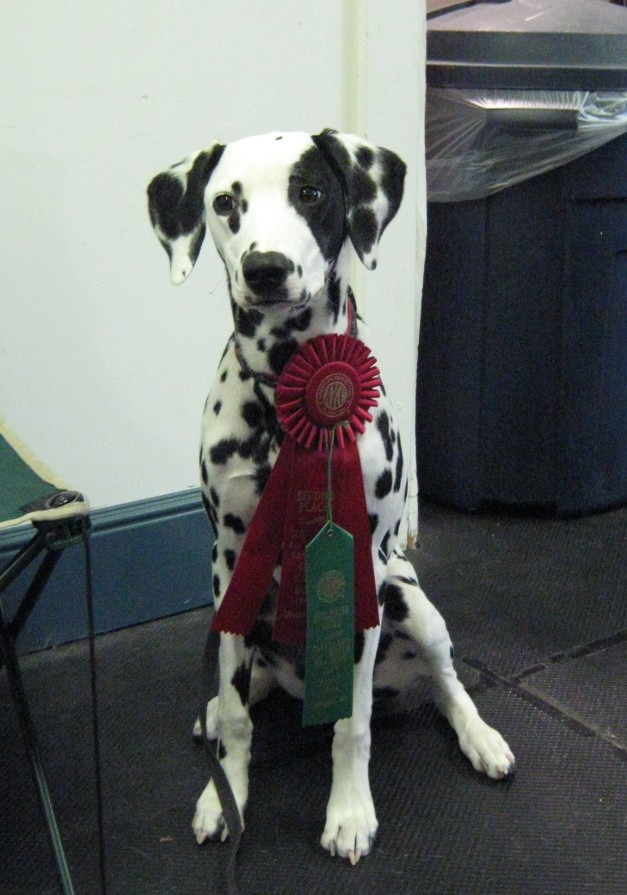 Spot takes second place at her first rally competition!